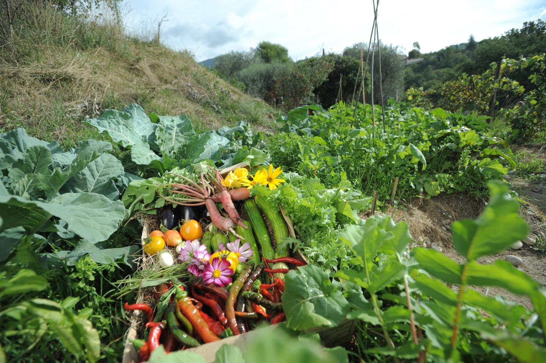 Produits locaux: Jardins partagés Plaine du Var, 06